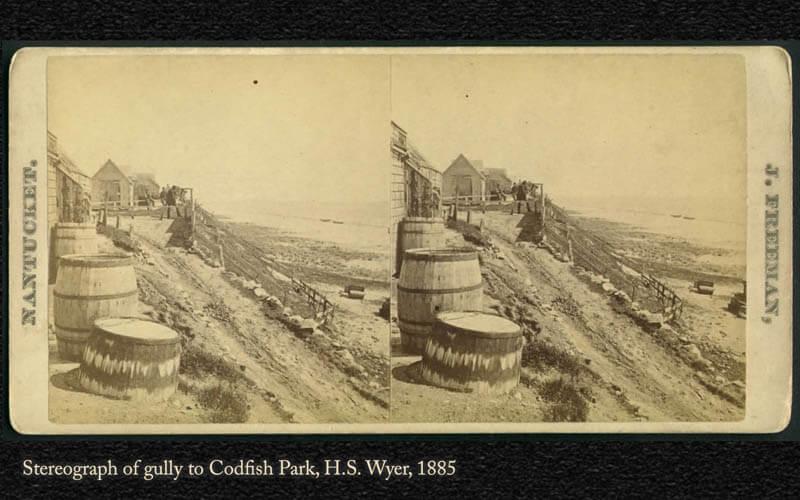 Codfish Park 1