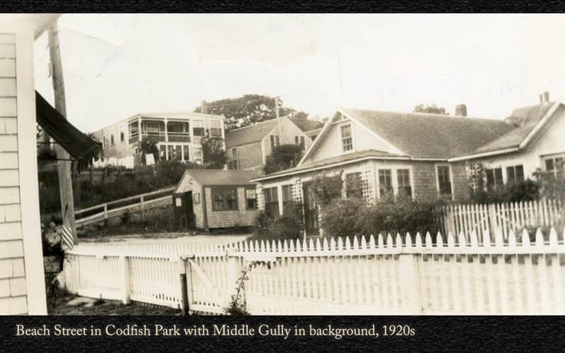 Codfish Park 29