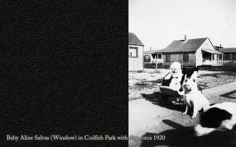 Codfish Park 41