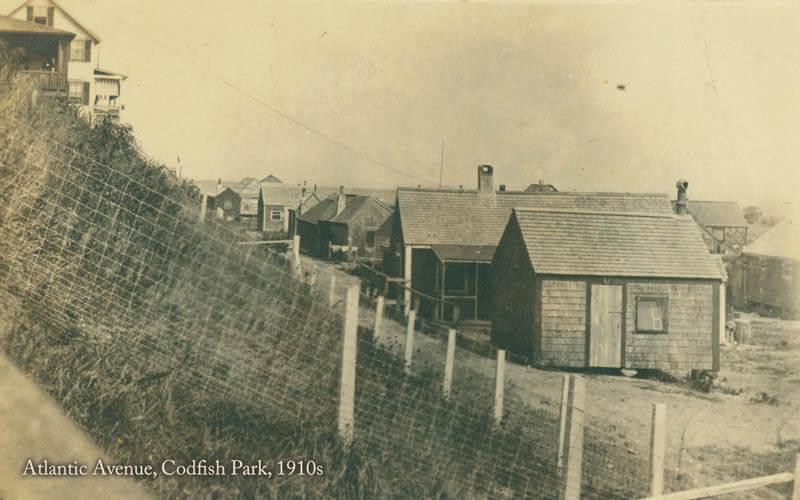 Codfish Park 48