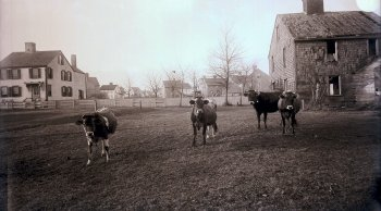 Eleanor Ham Pony Field, 1890s