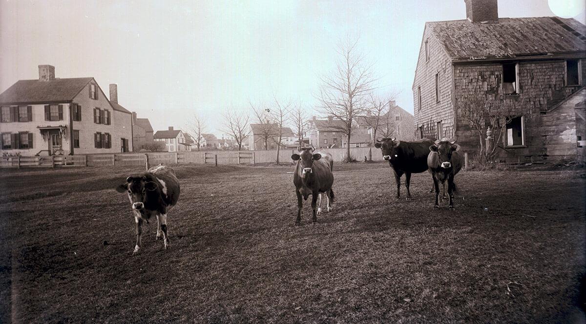 Eleanor Ham Pony Field, 1890s