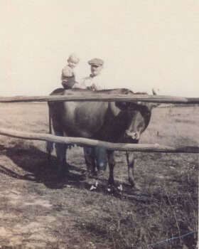 P21897, 1932 – Robert F. Mooney as a child sitting on a cow with his father, Lawrence F. Mooney, standing behind him at their farm in Polpis.